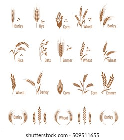 Cereals icon set with rice, wheat, corn, oats, rye, barley. Concept for organic products label, harvest and farming, grain, bakery, healthy food. Agricultural symbols isolated on white background.
