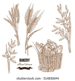 Cereals set. Hand drawn sketch illustration wheat, rye, oats, barley, bread in vintage style. Isolated