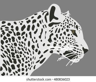 Ceylon leopard vector illustration. Side view, profile. Leopard head