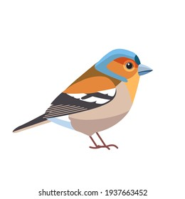 Chaffinch. Scientific name: Fringilla coelebs. Common chaffinch bird in the finch family Cartoon flat style beautiful character of ornithology, vector illustration isolated on white background.
