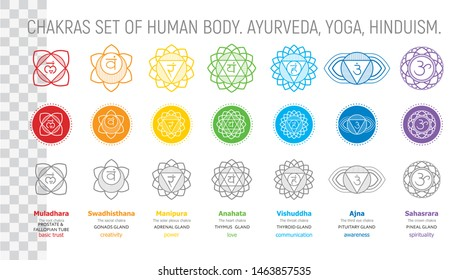 Chakras set of human body - vector drawing Sahasrara, Ajna, Vishuddha, Anahata, Manipura, Svadhisthana, Muladhara with text about his glands. Used in alternative medicine - Ayurveda, also in Hinduism