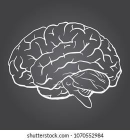 Chalk drawn Brain on schoolboard. Human brain side view. Sketch illustration hand drawn on chalk board
