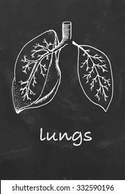 Chalk drawn half lung and leaf. Symbol of ecology or medicine. Vector illustration.