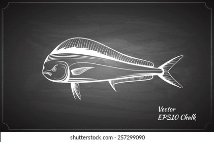 chalk painted dorado fish on the black chalkboard vector illustration