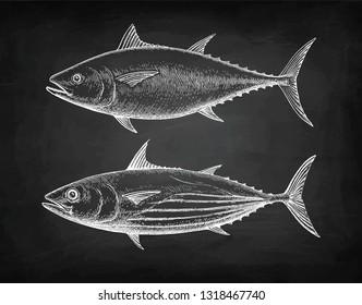 Chalk sketch of Skipjack and Atlantic bluefin tuna on blackboard background. Hand drawn vector illustration of fish. Retro style.