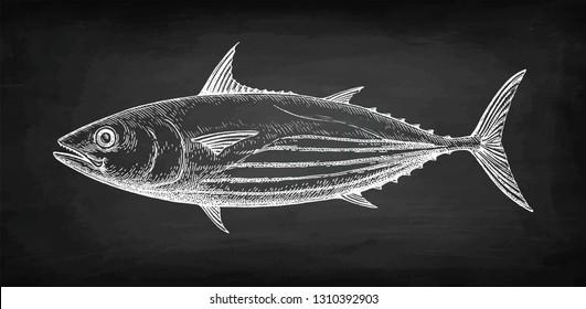 Chalk sketch of skipjack tuna on blackboard background. Hand drawn vector illustration of fish. Retro style.