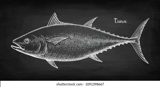 Chalk sketch of tuna on blackboard background. Hand drawn vector illustration. Retro style.