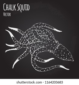 Chalk Squid hand drawn sketch illustration on blackboard. Ink outline drawing with marine animal, sea life illustration