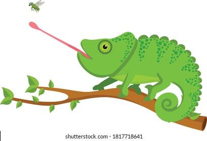 Chameleon catching flies cartoon vector art and illustration
