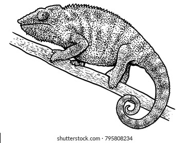 Chameleon illustration, drawing, engraving, ink, line art, vector
