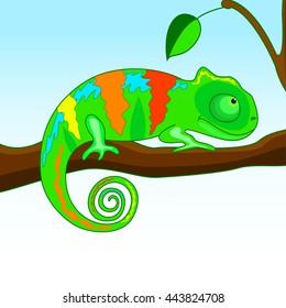 chameleon on the branch