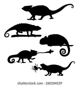Chameleon of silhouettes set vector