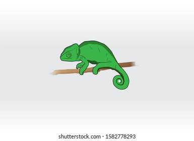 Chameleons that crawl on trees or branches. likes to eat insects and has a long tongue