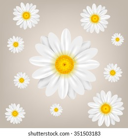 Chamomile. Background with isolated chamomiles. Vector illustration.