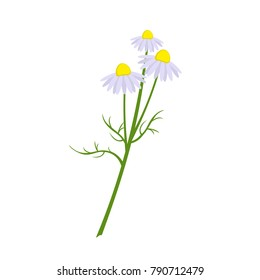 Chamomile drug in the style of flat. Isolated on a white background. Vector illustration