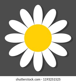 Chamomile flat vector icon on a grey background with shadow.