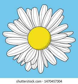 Chamomile flower. Isolated on blue background. Outline vector illustration.