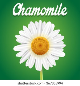 Chamomile flower isolated on green background