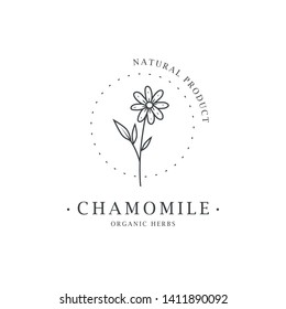 Chamomile flower. Logo for spa and beauty salon, boutique, organic shop, wedding, floral designer, interior, photography, cosmetic. Botanical floral element.