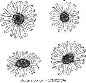 Chamomile flower outline set isolated element