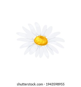 Chamomile flower with white petals and yellow middle isolated head icon. Vector daisy or camomile blossom, floral design element. Springtime daisy-flower realistic fresh bud closeup, gerbera drawing