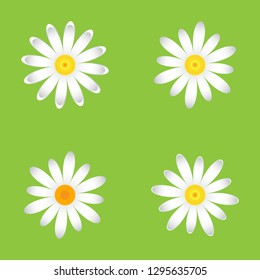 The chamomile flowers. Set single flower  of white daisies made of simple geometric shapes on a green background, icon, vector