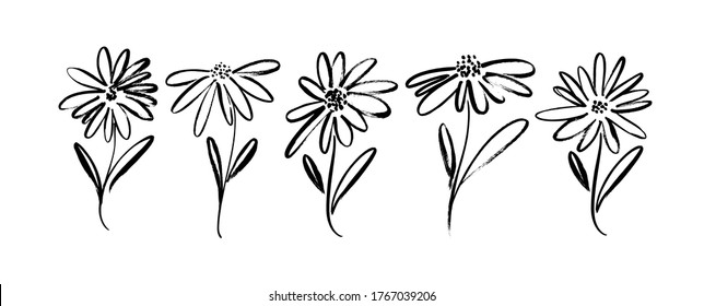 Chamomile hand drawn black paint vector set. Ink drawing flowers and leaves, monochrome artistic botanical illustration. Isolated floral elements, daisy, aster, chrysanthemum. Brush strokes silhouette