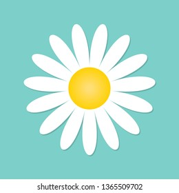 Chamomile icon. White tender daisy, signs are symbols of nature. Vector illustration of flower symbol in flat design.