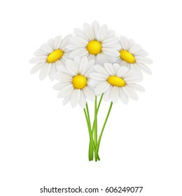 Chamomile, isolated on white background. Vector illustration.