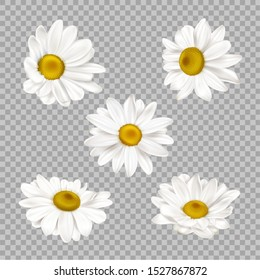Chamomile set, realistic camomile flower buds isolated on transparent background. Summer or spring blossoms with white petals and yellow center, daisy design elements 3d vector illustration, clip art