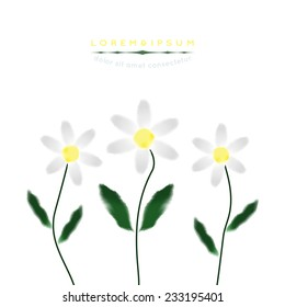 Chamomile in watercolor style. Vector.