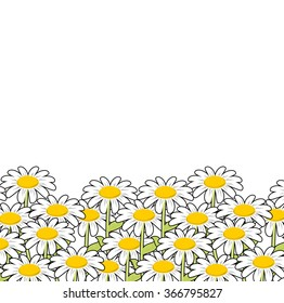 Chamomile. White flowers summer meadow. Beautiful wild flowers. summertime landscape and blossom.