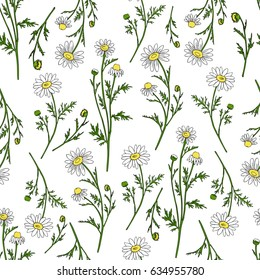 Chamomile wild field flower isolated on white background botanical hand drawn daisy sketch vector doodle illustration, seamless pattern for design package tea, cosmetic, medicine, textile, fabric