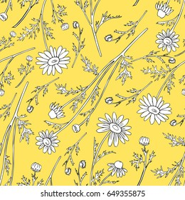Chamomile wild field flower isolated on yellow background botanical hand drawn daisy sketch vector doodle illustration, seamless floral pattern for design package tea, cosmetics, medicine, fabric