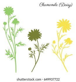 Chamomile wild field flower isolated on white background botanical hand drawn daisy vector silhouette doodle illustration for design package tea, organic cosmetic, natural medicine, greeting card