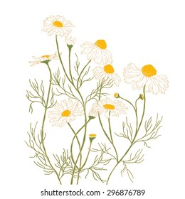 Chamomiles on a white background. Hand-drawn vector illustration.