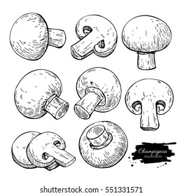 Champignon mushroom hand drawn vector illustration set. Sketch food drawing isolated on white background. Organic vegetarian product. Great  for menu, label, product packaging, recipe