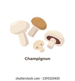 Champignon mushrooms isolated on white background, vector illustration in flat design. Group of portobello mushrooms.