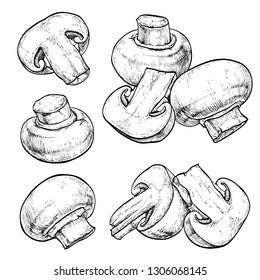 Champignons set. Vector illustration of mushrooms champignons on white background. Hand drawn style