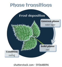 Changes of states. Part 3 of 6. Frost deposition - soft rime on raspberry leaves. Phase transition from gaseous to solid state. Educational infographics. Cartoon vector illustration in flat style.