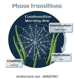 Changes of states. Part 4 of 6. Water condensation - morning dew. Phase transition from gaseous to liquid state. Educational infographics. Cartoon vector illustration in flat style.