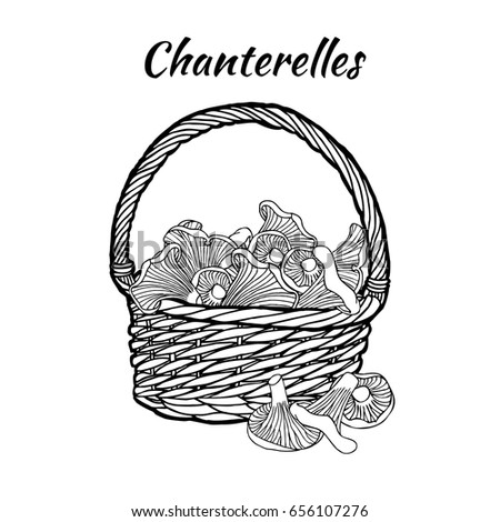 Chanterelle Basket Coloring Page Hand Drawn Stock Vector Royalty