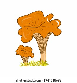 Chanterelle mushroom illustration. Colorful nature. Fungi. Idea for decors, picture in frame, gifts, ornaments, celebrations, invitation, greeting, logo, autumn holidays, environment themes.