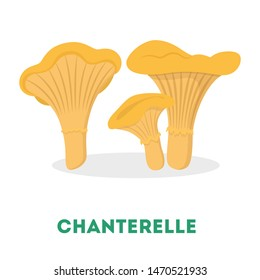 Chanterelle mushroom. Raw organic fungus. Vegetarian plant, ingredient for cooking. Isolated flat vector illustration