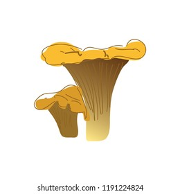 Chanterelles mushrooms. vegetable healthy food. Mushrooms isolated on white background