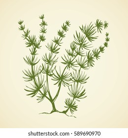 Characeae elodea, green seaware tuft and root isolated on white backdrop. Freehand outline black ink hand drawn picture sketch in art vintage doodle style pen on paper. View closeup and space for text
