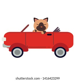 The character cute cat driving a red sport car. The cat driving a red car on the white background. cat smiling and   it look happy. cute cat in flat vector style.