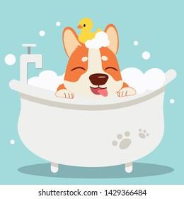 The character cute corgi dog taking a bath with bathtub.it look very happy .The corgi dog sitting in the bathtub with yellow rubber duck. cute corgi dog in flat vector style.