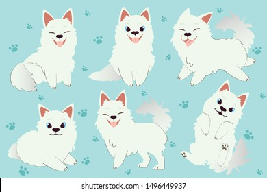 The character of cute samoyed dog sitting and standing on the blue background. The cute samoyed look happy and interesting.