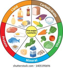 主な5つの栄養素のグラフ